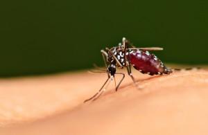 โรคไข้เลือดออก,โรคไข้มาลาเรีย